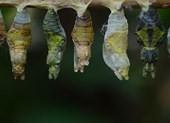 Cái kén bướm và bí mật của cái lỗ nhỏ