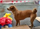 Cảm động chuyện F0 gửi chó cưng nhờ người chăm giúp khi đi cách ly
