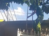 Trộm dỡ mái tôn, hốt sạch tiệm vàng ở Hóc Môn
