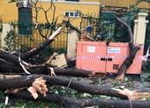 Cây gãy nhánh, đổ vào sân trường sau cơn mưa lớn ở quận 1