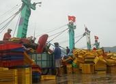 Bình Định: 2 tàu cá bị chìm, hàng chục người mất tích