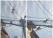Video: Đàn khỉ đại náo phố phường ở quận 12