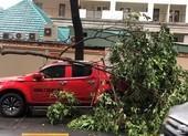 Cây xanh tét nhánh rơi trúng ô tô trong mưa lớn ở quận 1