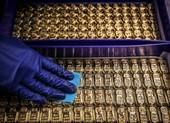 Giá vàng có nguy cơ rớt xuống 46,4 triệu đồng/lượng