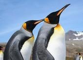 Những câu chuyện bí ẩn phía sau loài chim cánh cụt