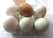 Trứng gà và trứng vịt, loại nào bổ dưỡng hơn?