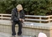 Cụ ông 94 tuổi bị bắt vì nhổ lông chim bồ câu