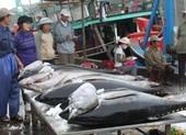 Trung Quốc mua nhiều cá ngừ từ Việt Nam để làm gì?