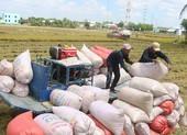 Chính thức kiến nghị cho xuất khẩu gạo bình thường, bỏ quota