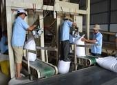 Trung Quốc, Indonesia tiếp tục tăng mua gạo Việt Nam