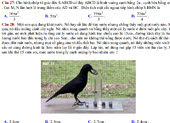 Thú vị chuyện 'Con quạ thông minh' vào đề thi toán