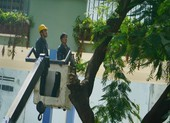 Sau sự cố cây đổ, trường Bạch Đằng xử lý cây phượng còn lại