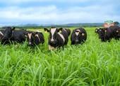 Sữa tươi Việt Nam đạt chất lượng chuẩn thế giới