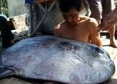 Ngư dân câu được cá 'khủng' 32 kg nghi cá mặt trăng