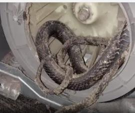 Ớn lạnh phát hiện rắn nằm trong máy sấy quần áo