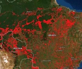 Cháy rừng Amazon lọt top Google Trends tuần qua
