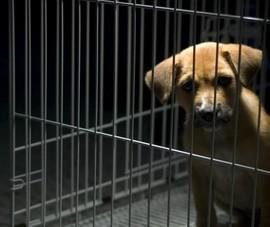 Tổng thống Hàn Quốc: Đã đến lúc cân nhắc cấm thịt chó