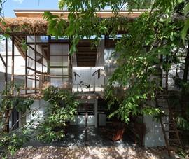 Căn gác gỗ giữa khu vườn xanh mướt ở TP Huế