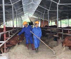 Nuôi 500 con bò phải kiểm kê khí thải nhà kính?
