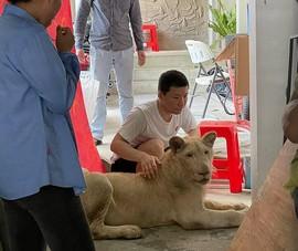 Campuchia cứu hộ cá thể sư tử bị 1 người Trung Quốc nuôi nhốt, bẻ răng nanh
