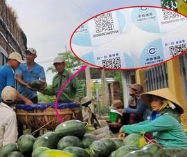 Dưa hấu Việt dán tem Trung Quốc là không sai