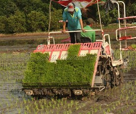 Ba vô lý về điều kiện mua đất trồng lúa