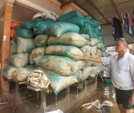 Người dân Quảng Bình gượng dậy sau lũ