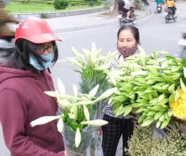 Video: Ngắm hoa tháng Tư trên phố phường Hà Nội