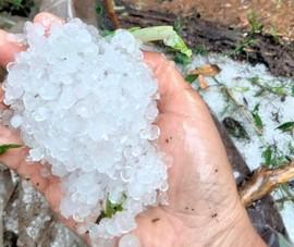 Quảng Nam: Mưa đá phá hỏng nhiều vườn Sâm Ngọc Linh