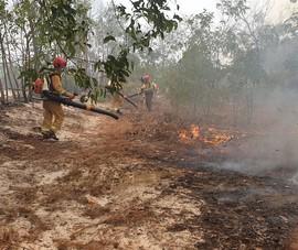 Quảng Nam: Cháy hàng chục hecta rừng phòng hộ ven biển