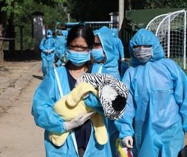 Quảng Ngãi đón 200 bà bầu về quê tránh dịch, Quảng Nam tiếp tục đón dân
