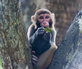 Trung Quốc có ca tử vong đầu tiên do nhiễm virus từ khỉ