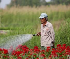 Ảnh: Ngắm làng hoa Sài Gòn cận tết Tân Sửu