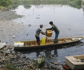 Vớt không nghỉ tay hơn 2 tấn cá chết trong ao