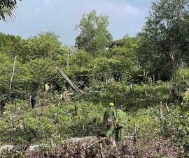Phú Quốc: Lợi dụng giãn cách, nhiều người bao chiếm đất rừng trái phép