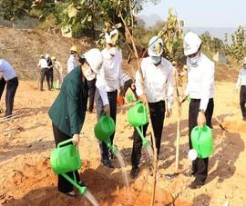 EVN phấn đấu trồng 1 triệu cây xanh