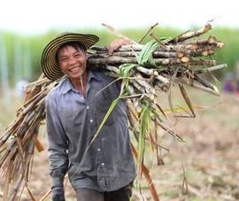 Đường Thái Lan giảm 75% nhờ áp thuế chống bán phá giá