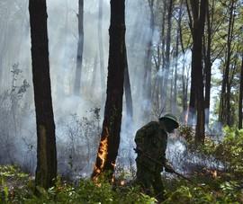Nguy cơ cháy rừng cấp V, Phó Thủ tướng có Công điện khẩn
