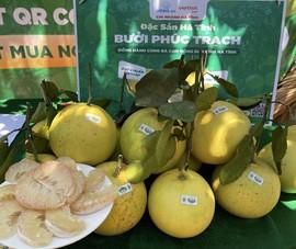 Xúc tiến tiêu thụ trái cây đặc sản nổi tiếng