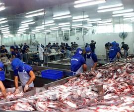 Gần một nửa nhà máy chế biến cá tra ở ĐBSCL dừng hoạt động