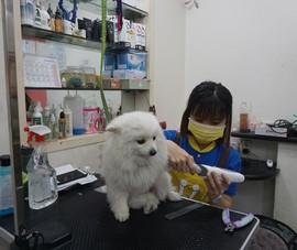 Kiếm 'bộn tiền' với dịch vụ chăm sóc thú cưng ngày tết