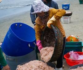 Ngư dân Đà Nẵng ra biển xúc ruốc kiếm tiền triệu mỗi ngày