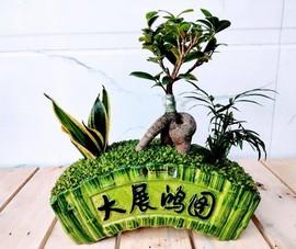 Gói trọn 'khu vườn mini' trong lòng bàn tay