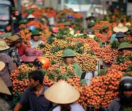 Đề xuất xác nhận kỷ lục chợ vải thiều dài nhất Việt Nam