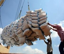 Vì sao ông lớn gạo Việt Nam lỗ nặng nề?