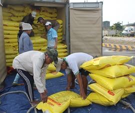 Lý do lần đầu Việt Nam mua gạo Ấn Độ