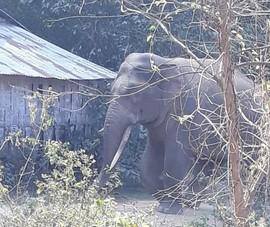 Chi hơn 3,1 tỉ đồng hỗ trợ người dân bị thiệt hại do voi rừng