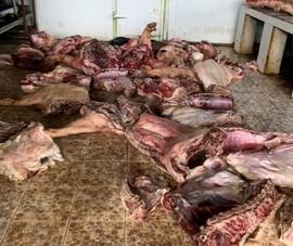 Bình Phước: Ngăn chặn thịt thối, bị dịch tả heo châu Phi