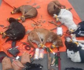 Bình Dương: Kẻ trộm chó tông ô tô vào công an khi bị phát hiện
