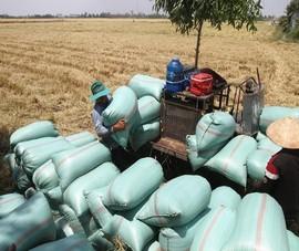 Cử tri An Giang phản ánh bị 1 công ty lương thực ép giá lúa
